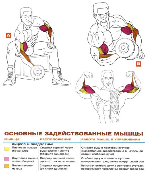 Упражнения на бицепсы в домашних условиях